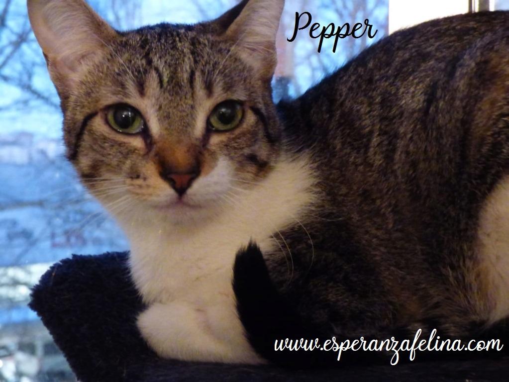 Araia y Pepper, preciosas gatitas buscan hogar. Alava (Fec. Nac. Aprox. 14/04/2018) Pepper14