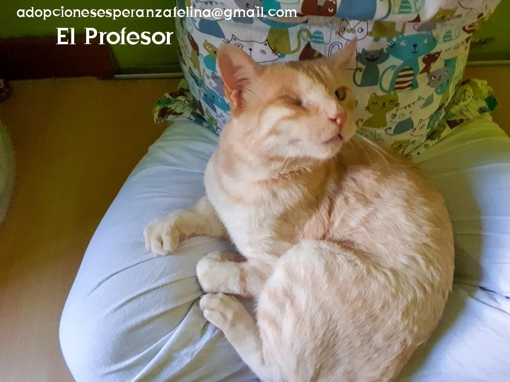 El Profesor en adopción (F.N aprox 01/05/2016. Álava, España) (Positivo a inmuno)  Photo101