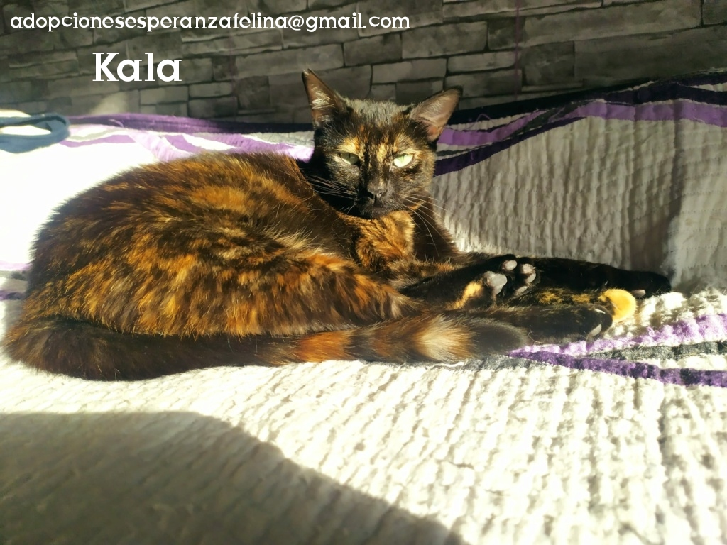 Kala, preciosa carey (Fec. Nac. Aprox. 01/01/2017) - Página 2 Photo106