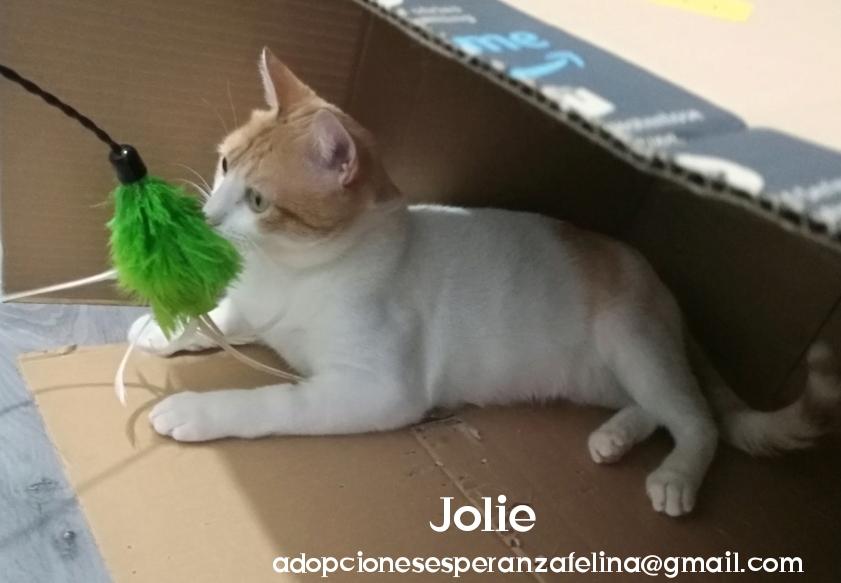 Jolie, dulce gatita en adopción, Álava (f.n. 01/10/19)  Photo108