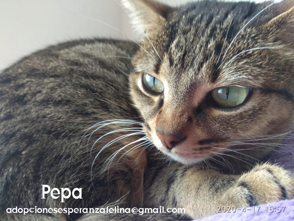 Pepa,preciosa gatita necesita hogar (f.n.aprox 28/04/13) Photo109