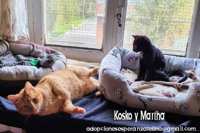 Kosko y Martha, parejita maravillosa. Álava, Esp. (F. N. 22/08/2018 y 24/07/2020)  Photo113