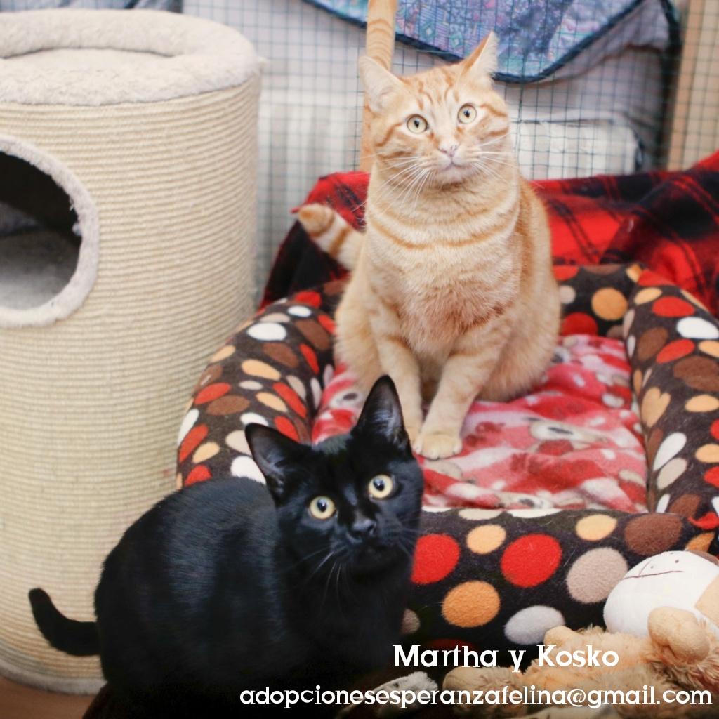 Kosko y Martha, parejita maravillosa. Álava, Esp. (F. N. 22/08/2018 y 24/07/2020)  Photo116