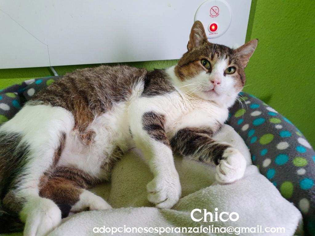Chico en adopción. Álava-ESP (F.N. aprox. 2006. +Inmuno y Leucemia) Photo118