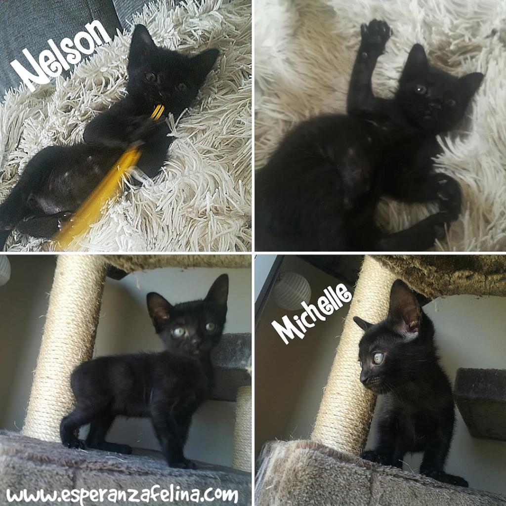 Nelson y Michelle parejita adorable en adopcion  (Alava F.N. 17/06/2018) Photo_10
