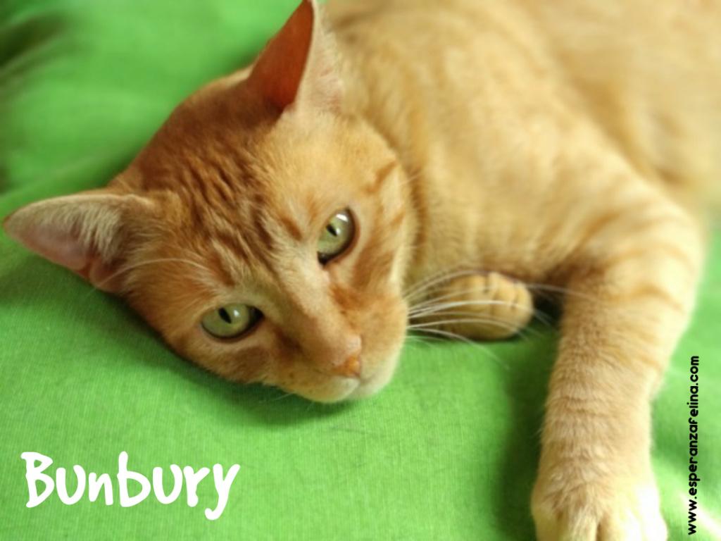 Bunbury, rubiazo en adopción. (Álava, F.N 01/01/14) Photo_25