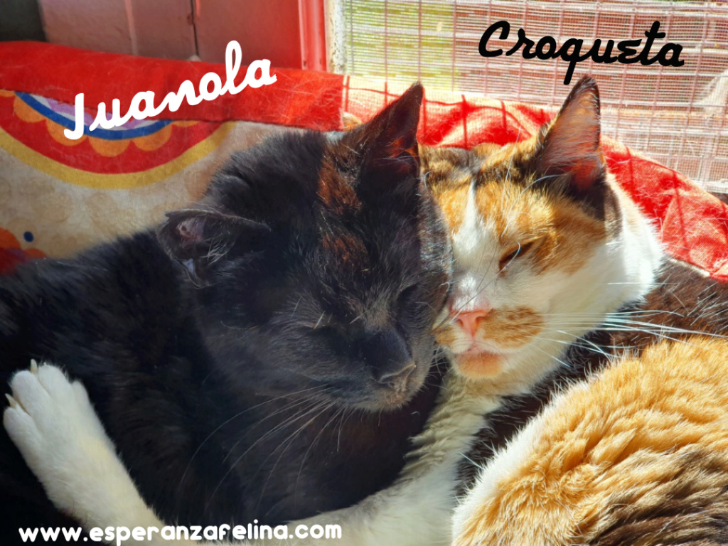 Croqueta y Juanola, preciosas abuelitas buscan hogar. Alava (FN: 02/08/2006; 14/06/2006) Photo_27