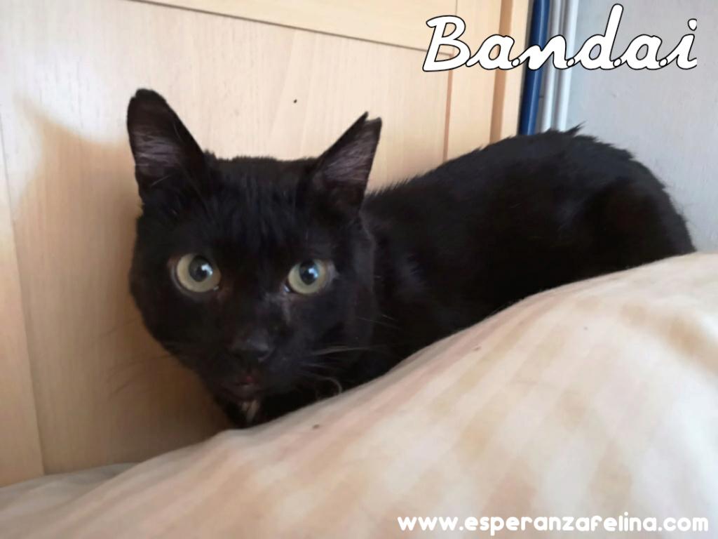Bandai, precioso negruchi busca hogar. (F.N Aprox: 16/07/15) Photo_28