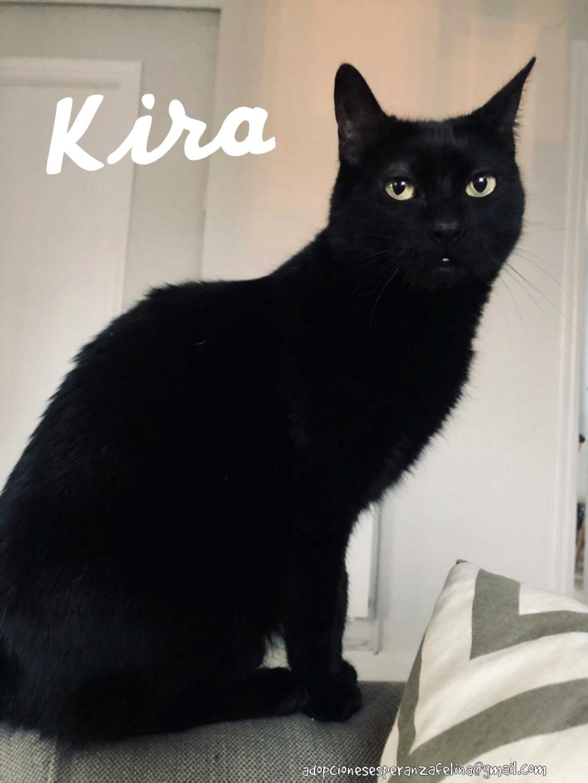 Kira, panterita en adopción (F.N. 25-07-10) Photo_34