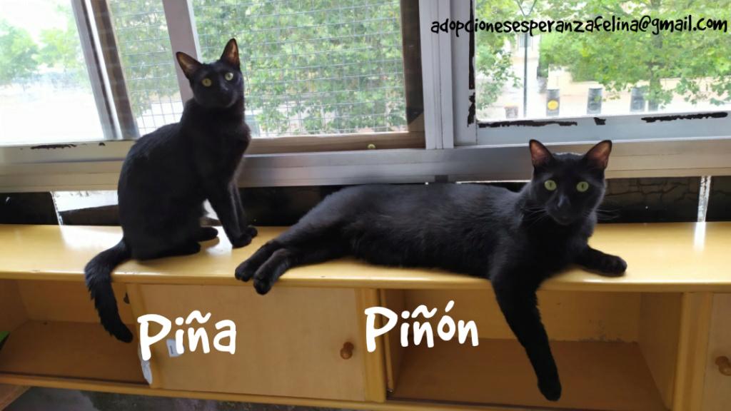Piña y Piñón, parejita de negruchis en adopción (Alava, Fecha de nacimiento aprox.: 06/09/2017) Photo_37