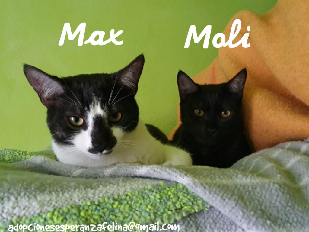 Max y Moli, preciosos hermanitos en adopción (Álava-España f.n.aprox 08/05/19)  Photo_38