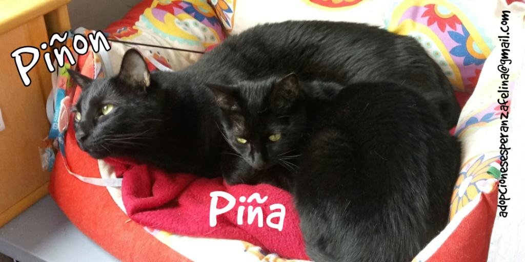 Piña y Piñón, parejita de negruchis en adopción (Alava, Fecha de nacimiento aprox.: 06/09/2017) Photo_39