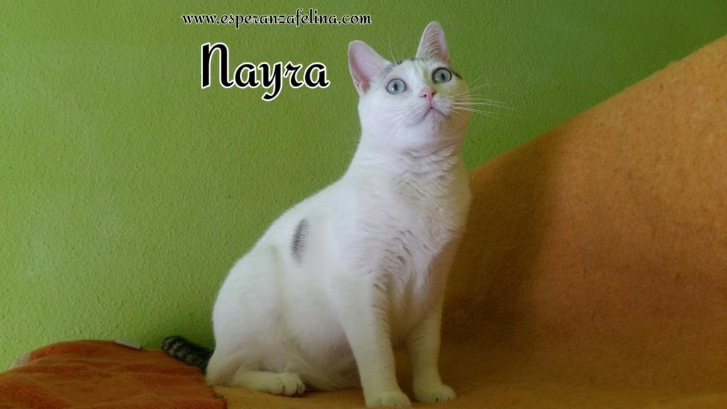 Nayra, gatita de ojos cautivadores en adopción. Alava (Fecha Nac. aprox: 11-08-2015) Photos12