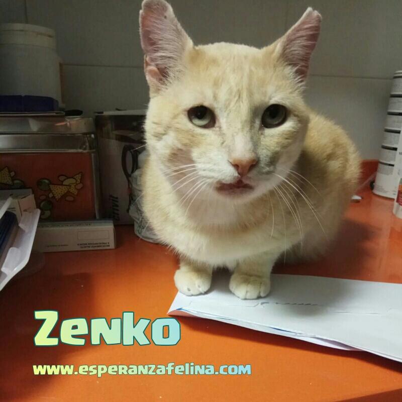 Zenko, precioso rubio en adopción. (F.N aprox: 15/01/2013) (Positivo a inmuno) Álava. Photos14