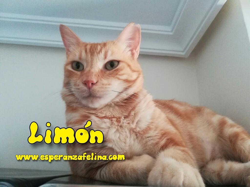 Limón 2, rubito adorable busca hogar. Alava. (Fec. Nac. Aprox. 01/01/2015) Photos15