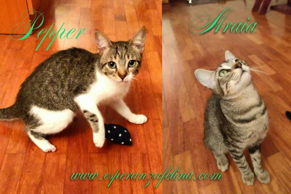 Araia y Pepper, preciosas gatitas buscan hogar. Alava (Fec. Nac. Aprox. 14/04/2018) Photos17