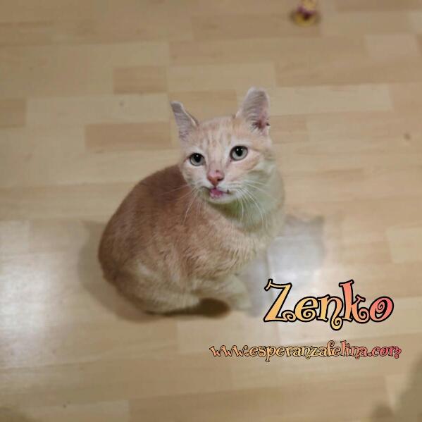 Zenko, precioso rubio en adopción. (F.N aprox: 15/01/2013) (Positivo a inmuno) Álava. Photos19
