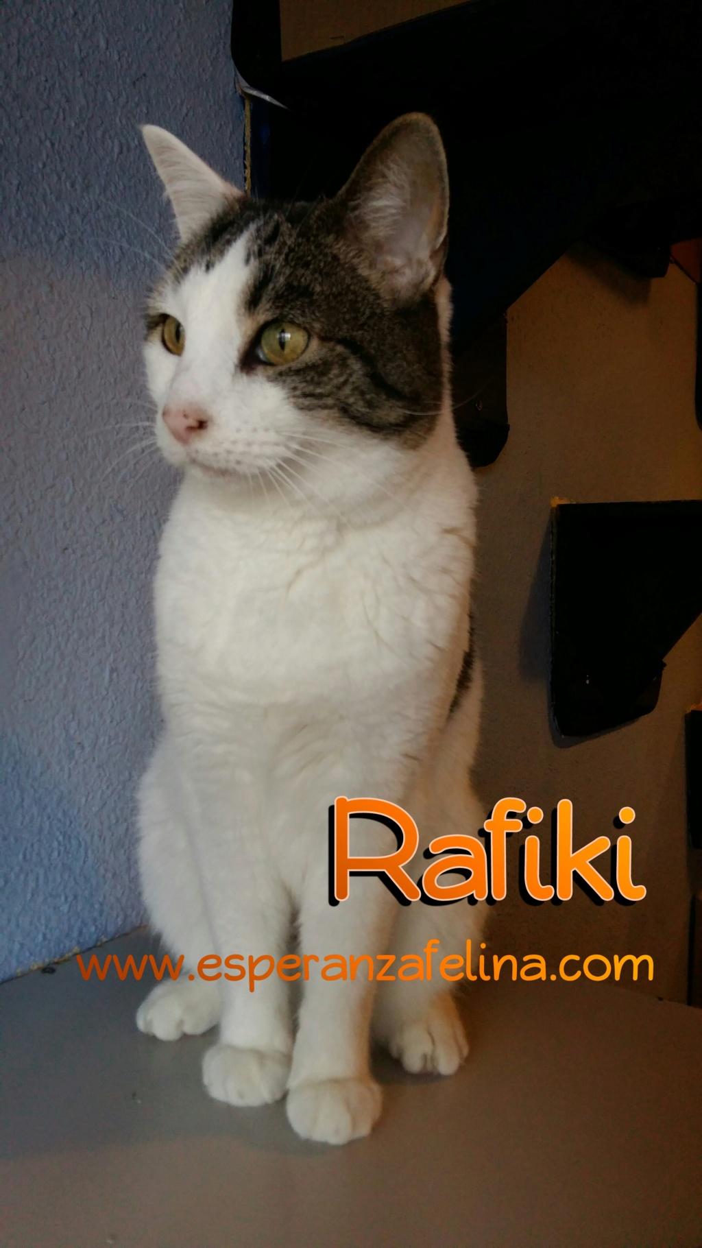 Rafiki. Adulto en adopción ( Álava - España 25.04.07) Photos21