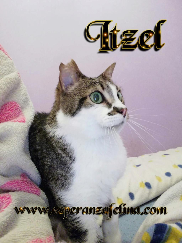 Itzel, preciosa gatita. Álava. (Fec. Nac. Aprox. 01/07/2012) Photos22