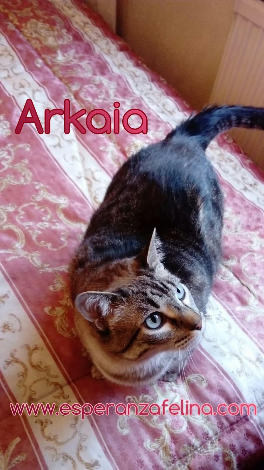 ARKAIA, gatita rescatada en la zona de Arkaiate (F.N. aprox: 1/01/2016) Álava Photos26