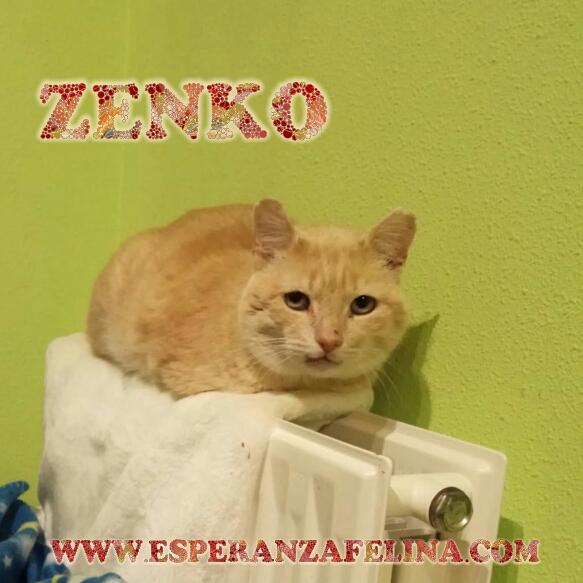 Zenko, precioso rubio en adopción. (F.N aprox: 15/01/2013) (Positivo a inmuno) Álava. Photos28