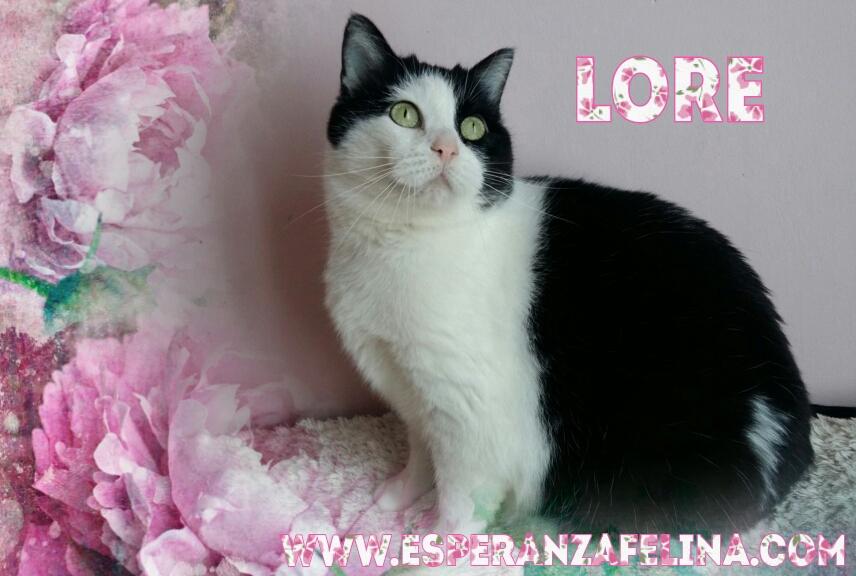 Lore, preciosa vaquita luchadora en adopción (Álava, F.N aprox. 2/04/12) Photos29