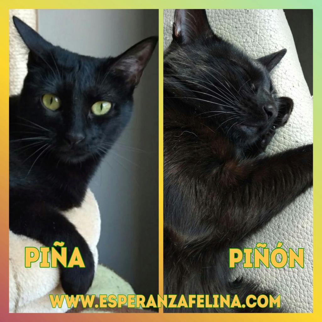 Piña y Piñón, parejita de negruchis en adopción (Alava, Fecha de nacimiento aprox.: 06/09/2017) Photos32