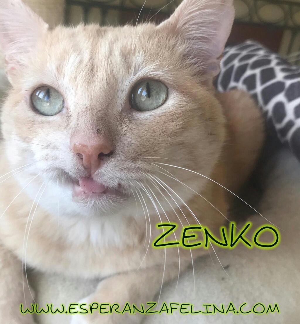 Zenko, precioso rubio en adopción. (F.N aprox: 15/01/2013) (Positivo a inmuno) Álava. Photos33
