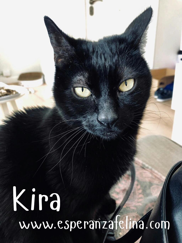 Kira, panterita en adopción (F.N. 25-07-10) Photos34