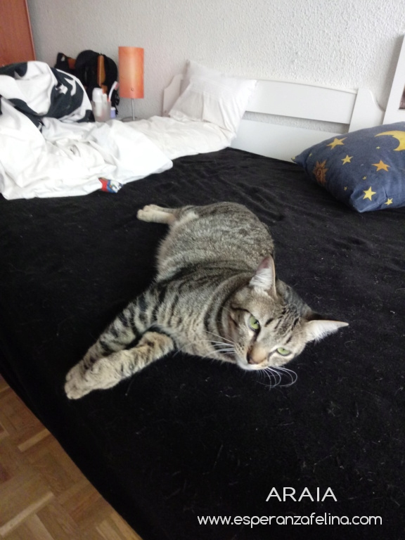 Araia y Pepper, preciosas gatitas buscan hogar. Alava (Fec. Nac. Aprox. 14/04/2018) Photos39