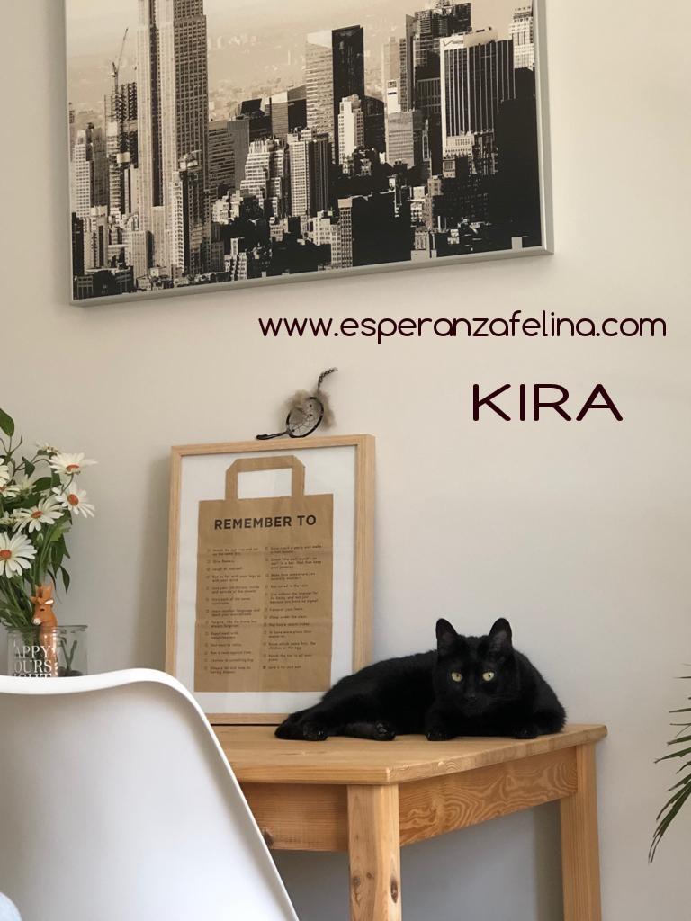 Kira, panterita en adopción (F.N. 25-07-10) Photos42