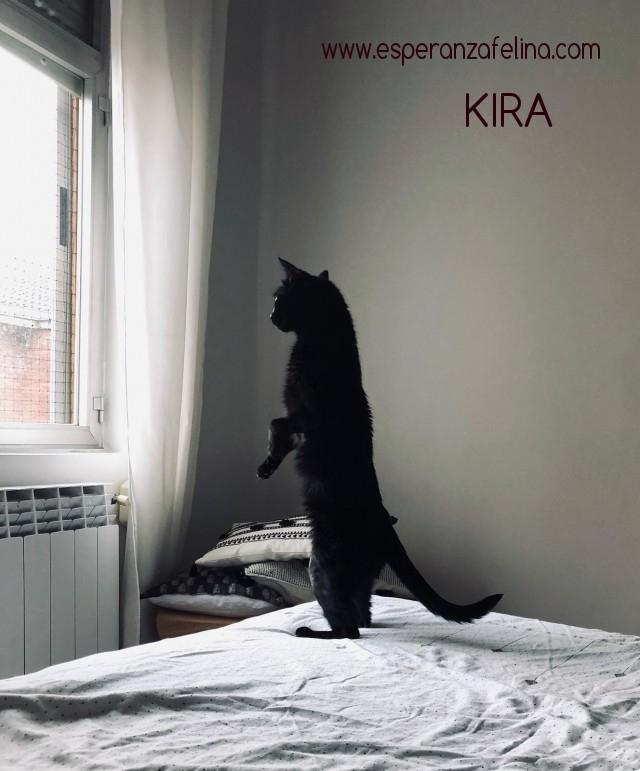 Kira, panterita en adopción (F.N. 25-07-10) Photos43