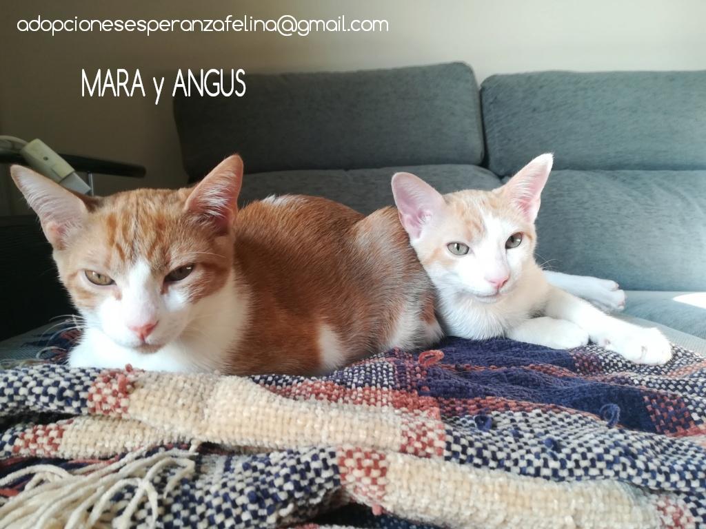 Mara y Angus, hermanitos divertidos buscan familia (Alava-España f.n.aprox 08/04/19) Photos46
