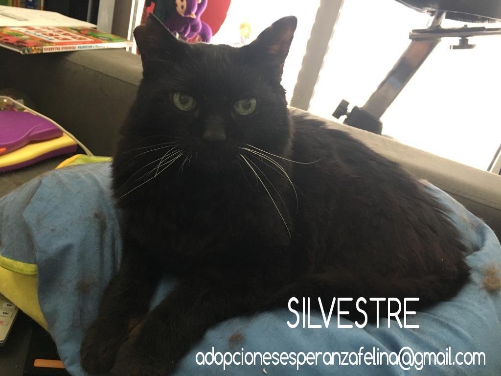 Silvestre, Precioso negrito busca casita en la que le adoren. Alava  ( F.N:  01-10-2006) - Página 2 Photos47
