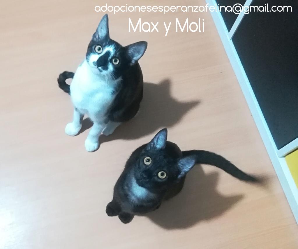 Max y Moli, preciosos hermanitos en adopción (Álava-España f.n.aprox 08/05/19)  Photos50