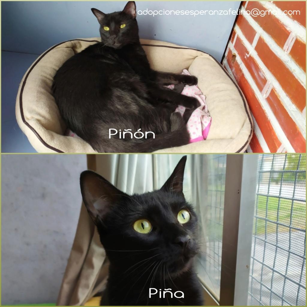 Piña y Piñón, parejita de negruchis en adopción (Alava, Fecha de nacimiento aprox.: 06/09/2017) Photos52