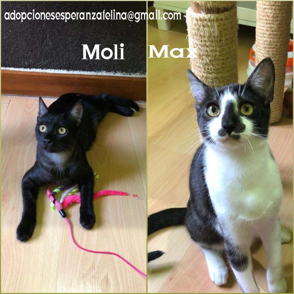 Max y Moli, preciosos hermanitos en adopción (Álava-España f.n.aprox 08/05/19)  Photos55