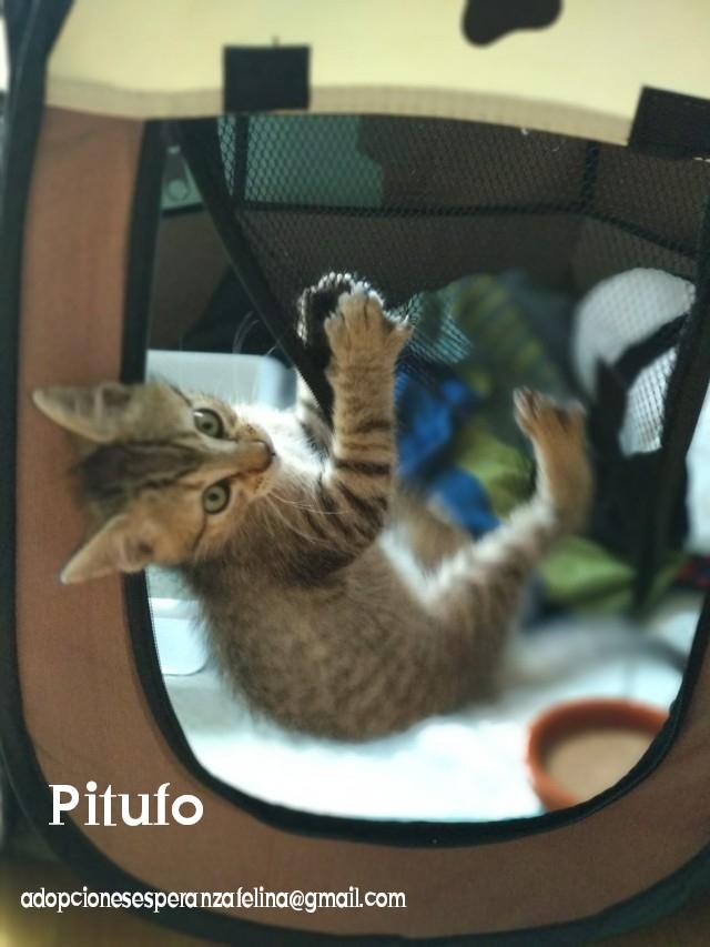 Pitufo, cachorro encantador (Álava - Fec. Nac. 30/08/2019)  Photos57