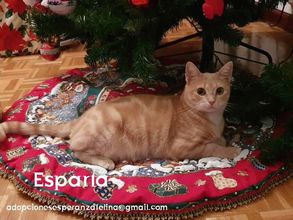 Esparta, preciosa gatita rubia. Álava Photos60