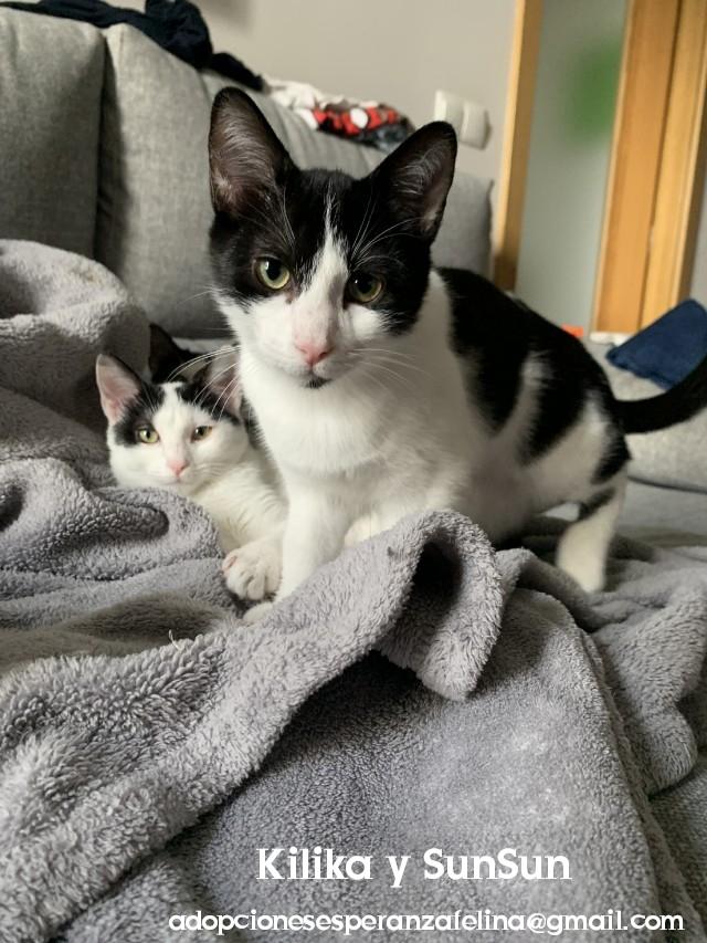 Kilika y SunSun, dos amores en adopción (F. N.13/05/2019 Álava, Esp.)   Photos71