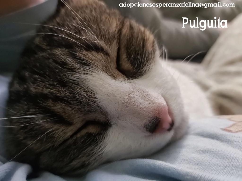 Pulguita, preciosa y mimosa gatita busca hogar. (F.N: 15/05/2012) (Positiva a inmuno + Leucemia) Álava. - Página 2 Photos72