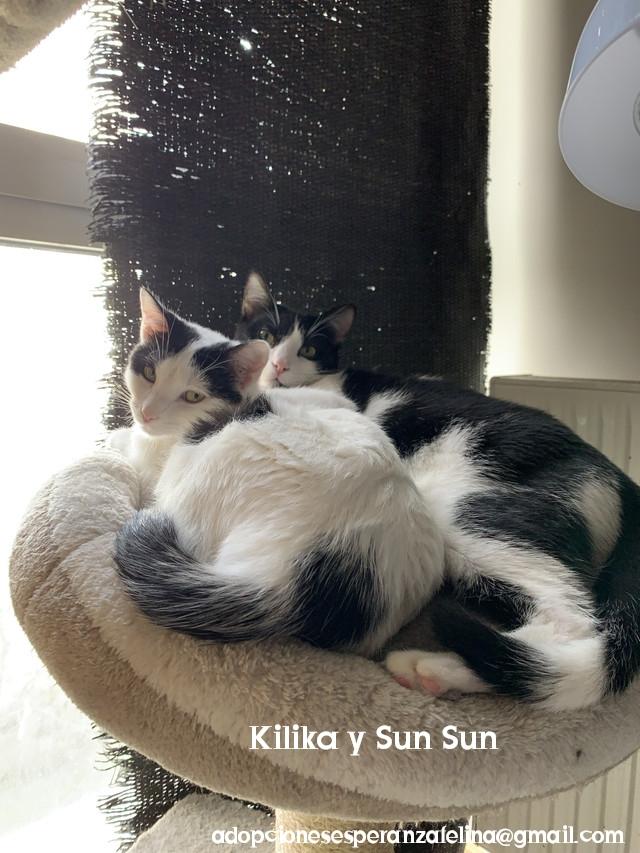 Kilika y SunSun, dos amores en adopción (F. N.13/05/2019 Álava, Esp.)   Photos74