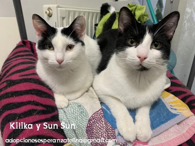 Kilika y SunSun, dos amores en adopción (F. N.13/05/2019 Álava, Esp.)   Photos77