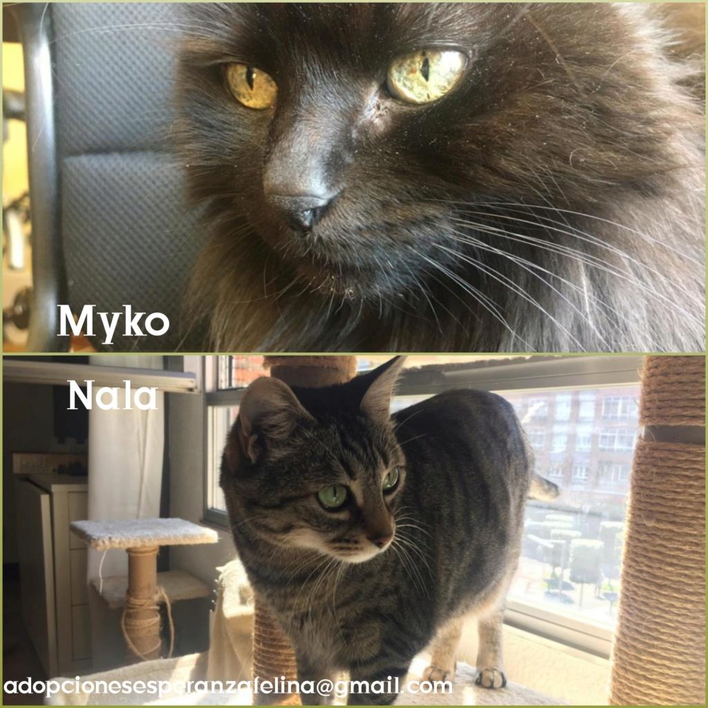 Myko y Nala, preciosas peques en adopción. Álava-España (F.N: 22/01/07 y 28/04/11) Photos79