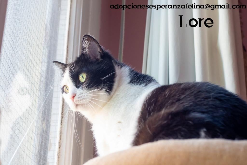 Lore, preciosa vaquita luchadora en adopción (Álava, F.N aprox. 2/04/12) - Página 2 Photos85