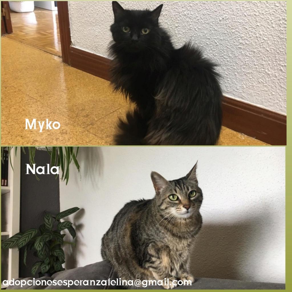 Myko y Nala, preciosas peques en adopción. Álava-España (F.N: 22/01/07 y 28/04/11) Photos95