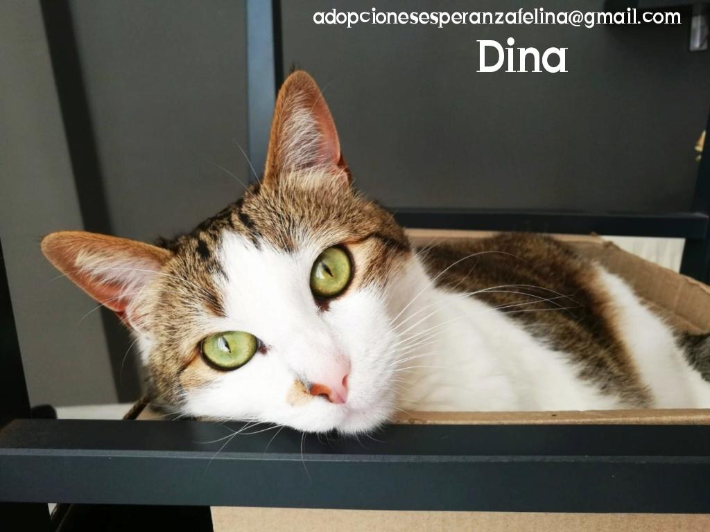 Dina, preciosa gata busca su hogar (Álava, fecha de nacimiento aproximada 10/04/2014 ) - Página 2 Photos99