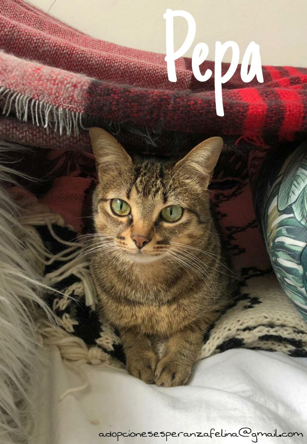 Pepa,preciosa gatita necesita hogar (f.n.aprox 28/04/13) Picsar26
