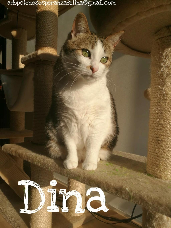 Dina, preciosa gata busca su hogar (Álava, fecha de nacimiento aproximada 10/04/2014 ) - Página 2 Picsar27