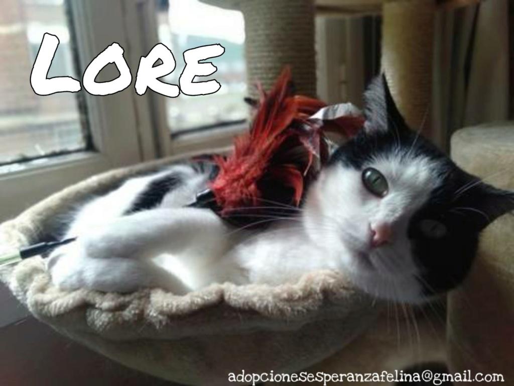 Lore, preciosa vaquita luchadora en adopción (Álava, F.N aprox. 2/04/12) - Página 2 Picsar32